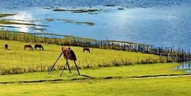 蓝衍完结篇.香格里拉纳帕海,水做的依拉草原
